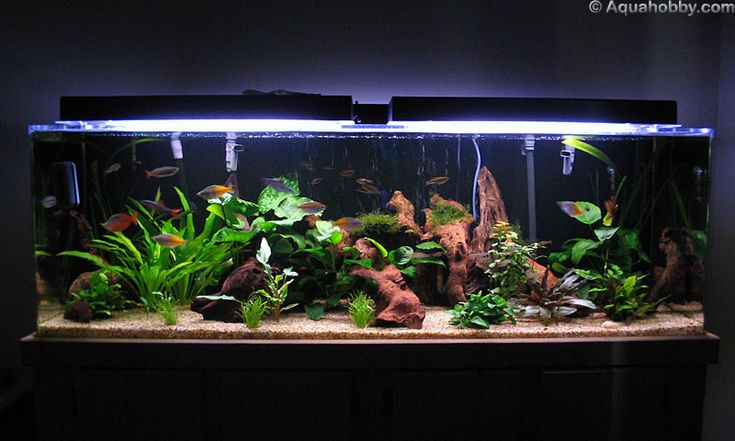 Doesn 39 t have to be saltwater tank to be pretty aquarium for Community fish list