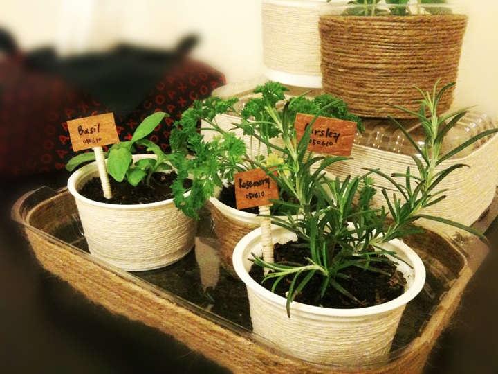 DIY, Mini Indoor Herb Garden