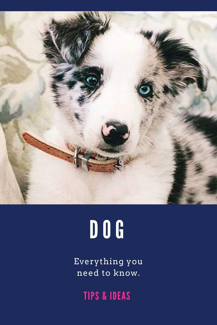 Dogs Some Essential Tips For A Happy Dog More Details Can Be