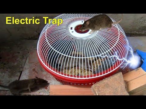 Best Electric Rat Trap | Electric Mouse Trap | Homemade