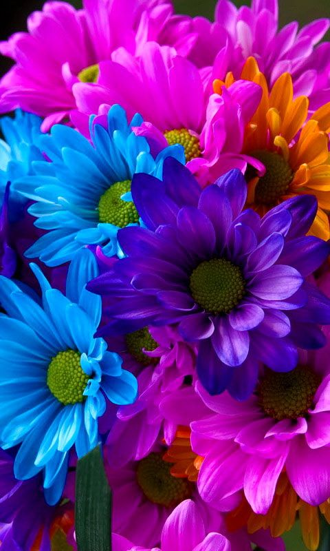 Free Colorful Flower Desktop Wallpaper: Colorful Plant Wallpapers (111 Wallpapers)