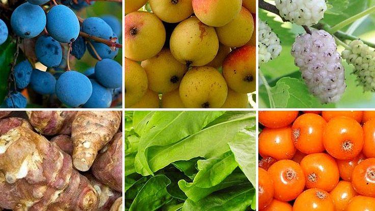 Hazánk bővelkedik egészséges gyümölcsökben, zöldségekben és gyógynövényekben, azonban a legjobb superfoodokat ma már teljesen mellőzi táplálkozásunk.Pedig
