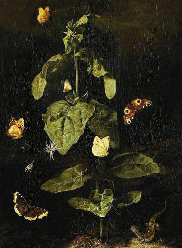 Otto Marseus van Schrieck Forest Floor Still Life with Butterflies and Lizards 17th century