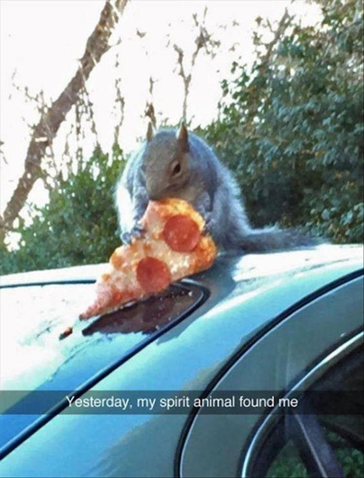 16 Funny Animal Pictures for Today - 8 Bit Nerds shares the best funny pics, video games, sci-fi, fantasy, comic, and cosplay pics on the web!