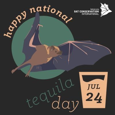 HAPPY NATIONAL TEQUILA DAY!! As you sip a margarita or a tequila sunrise today, pause for a moment to reflect on the contribution made to the tequila industry by some long unacknowledged friends: long-nosed bats. These bats are the main pollinators of the agave plants that give us tequila!
