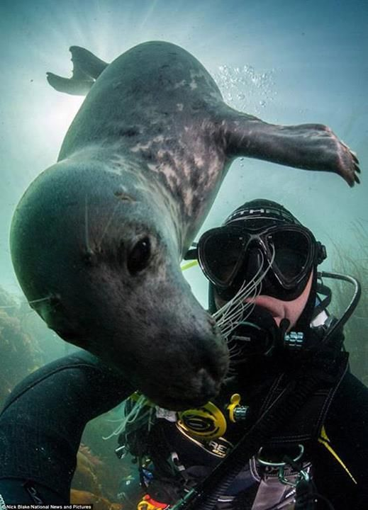 This is why I scuba dive... where else in the work can you play with these underwater puppies?