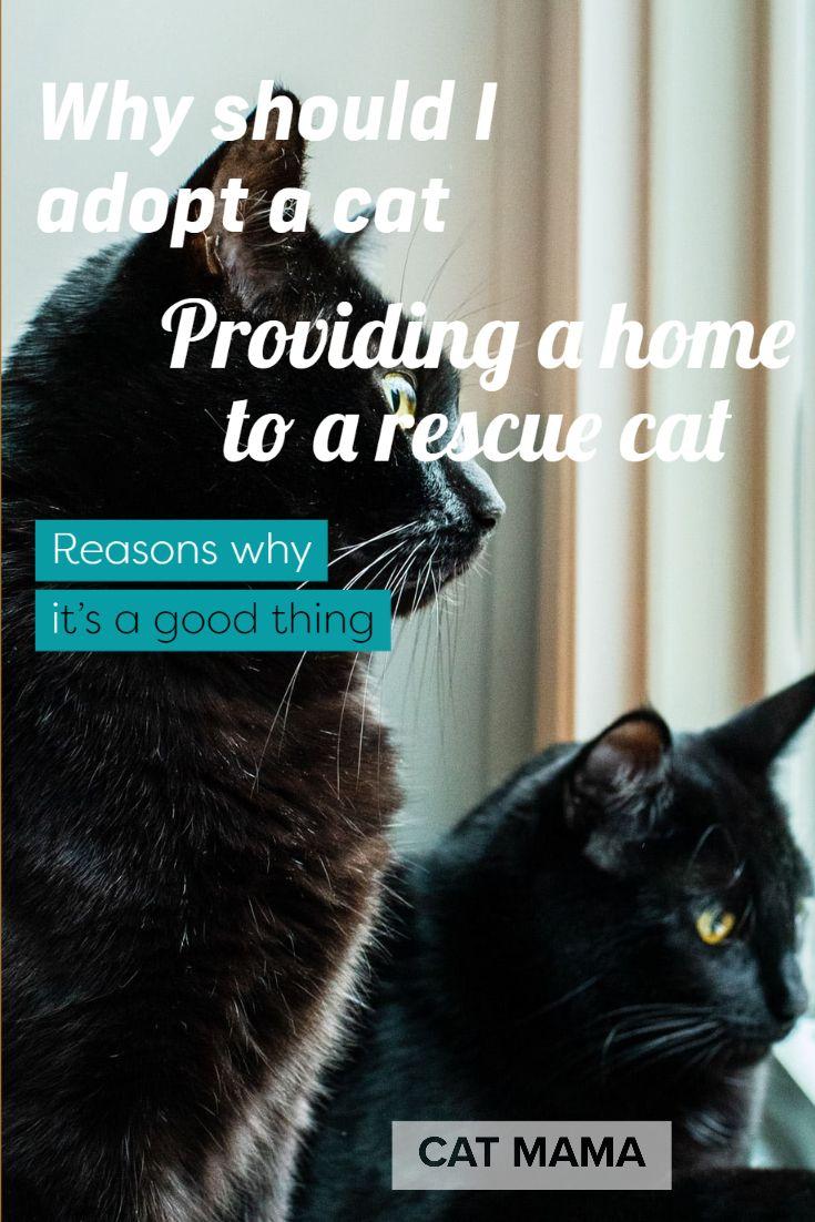 Why Should I Adopt A Cat Providing A Home To A Rescue Cat In 2020 Cat Adoption Cat Rescue Mama Cat