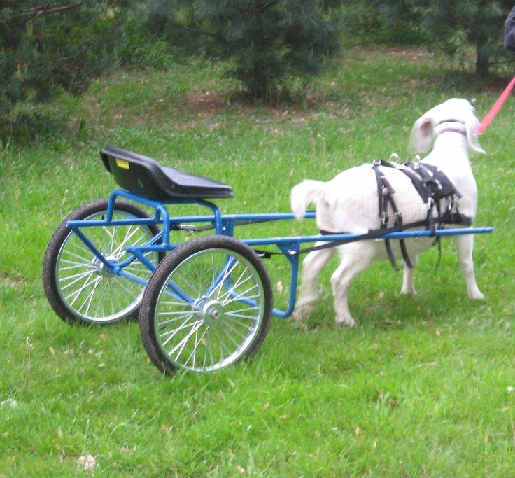 Goat Cart Plans - Four Snyders' Farm