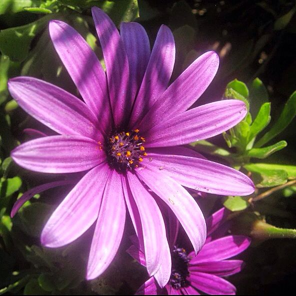 Flor en parque Playa del Sol  Viña del Mar 2014 Foto cámara Canon Powershot 550SD macro (MMM)