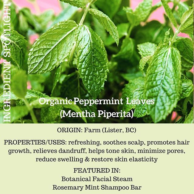 P E P P E R M I N T  . . . . . #peppermint #organic #farmtoskin #locallygrown #britishcolumbia #nature #haircare #facialcare #greenbeauty #plantbased #allnatural #beautyfinds #greenbeautyblogger #naturalhair #madeinvancouver #localingredients #facialsteam #fresh #herbalskincare #botanicals #botanicalbeauty #shampoobar #beautysteam #ecoluxe #sustainable #ecofriendly #greenliving #wildjasmine