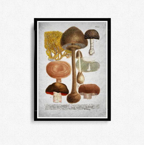 Antieke botanische paddestoelen afdrukken, keuken decor, illustratie digitale download, botanische Vintage Art Prints, Vintage poster paddestoelen * 28 *