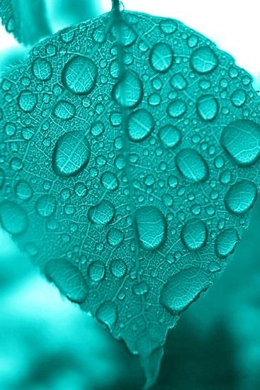 Dewdrops on a turquoise leaf