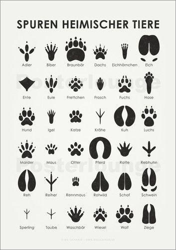 Iris Luckhaus - Spuren heimischer Tiere