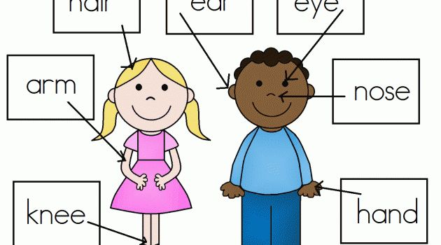 WH - Learning about the human body. | rainbow-montessori ...