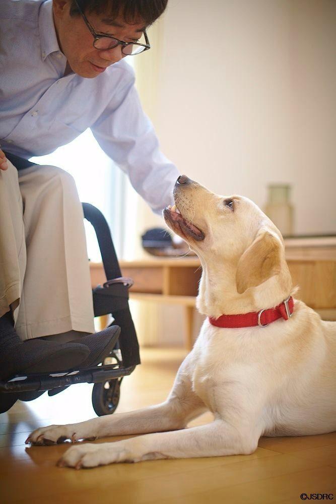 介助犬ユーザーさんから、介助犬に「ありがとう」  補助犬は盲導犬・介助犬・聴導犬の総称です。  #ほじょ犬の日