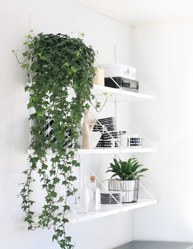 Fyi These Are The 5 Best Hanging Plants For Self Professed Black Thumbs Indoor Vines Hanging Plants Indoor Plant Decor Indoor