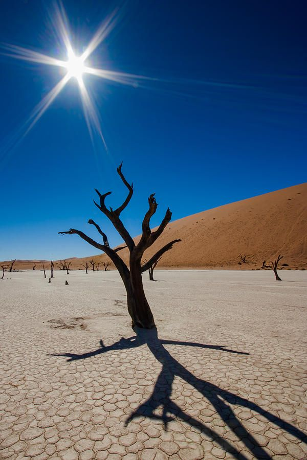 ✮ Dead Acacia Trees, Namib Desert, Namibia