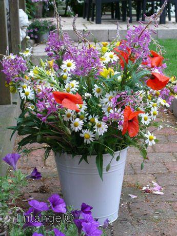 Een veldboeket maken uit eigen tuin! - Plazilla.com