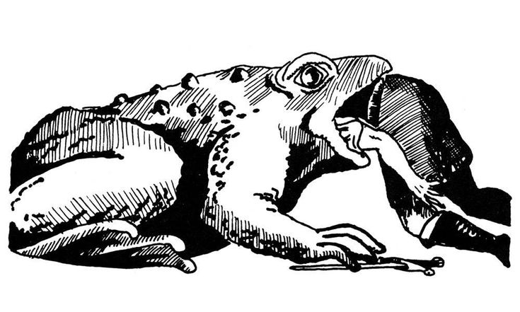 Giant toad, 1st ed style (AD&D Monster Manual, TSR, 1977