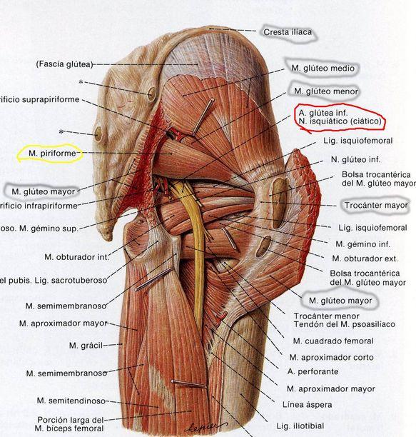 PAPI RUNNING: El síndrome piramidal. Mi actual lesión/molestia.
