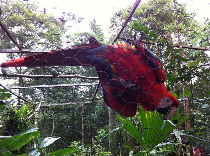 Hello! #ecuador #wildlife