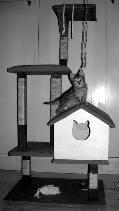 Oltre 25 fantastiche idee su mobili per gatto su pinterest for Materiali mobili