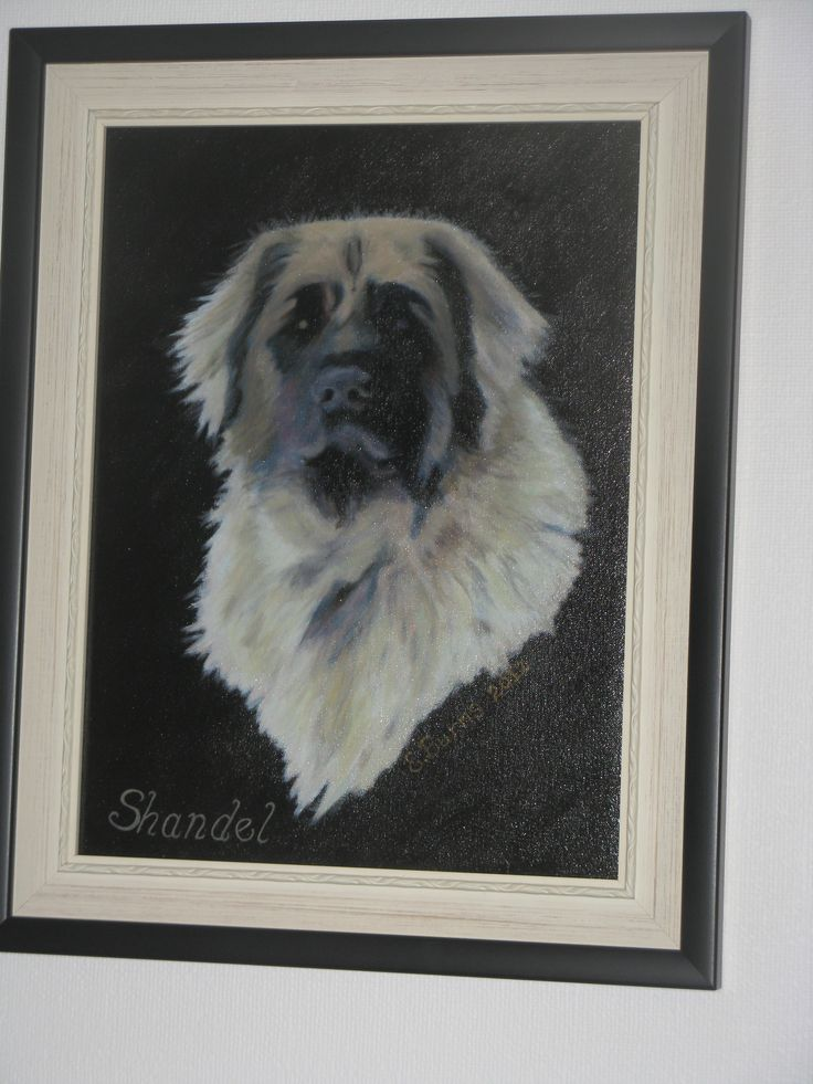 This is Shandel, a daughter of Triomph and Etoile (our French imported foundation bitch). She is from our second litter, a rare sand colour. Pretty lousy photo of the painting, but I'm not good at photography. The reflected light always gets me.