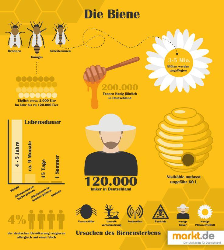 Die Biene – mehr als nur ein Honiglieferant