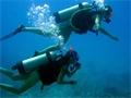 Belize Diving Tours | Ambergris Caye Diving Trips | San Pedro Belize