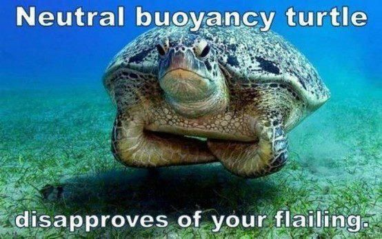 What is the Peak Performance Buoyancy Course and Why Should You Take It?