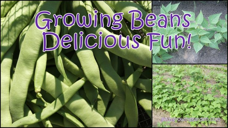 Sew Crafty Angel: Growing Beans - Delicious Fun!