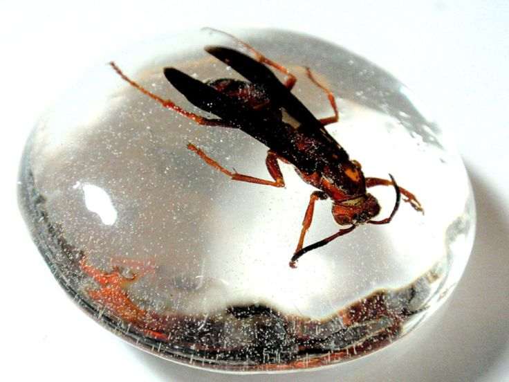 Large Real Red Wasp Cabochon Creepy Insect Arachnid in Resin Taxidermy Halloween Decoration Arachnology Entomology Specimen A2 by TUTreasures on Etsy
