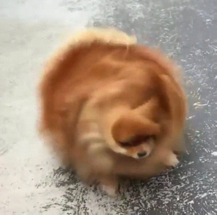 Unique Dogs With Incredibly Amazing Coats Cute Funny Animals Funny Animals Cute Baby Animals