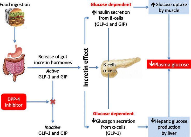 Cardiovascular effects of Glucagon-like peptide 1 (GLP-1) receptor agonists | Cardiovascular Diabetology | Full Text