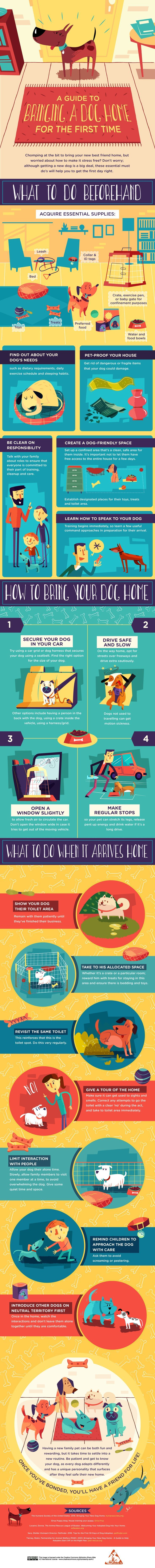 Bringing a dog home for the first time may seem easy, but there's a lot to consider. This graphic from the Santa Fe Animal Shelter is a quick primer to what you need to know and consider before your first furry companion comes home with you.