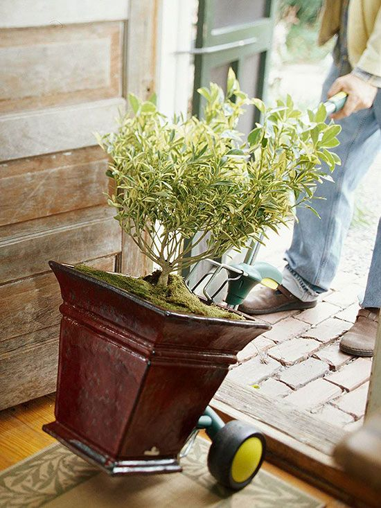 Tips for Moving Plants Indoors by bhg #Gardening #Moving_Plants_Indoors