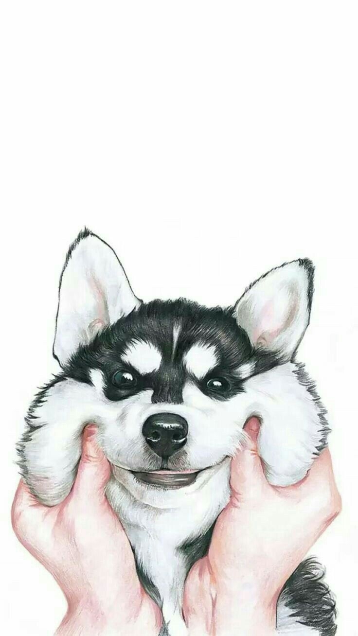 Wallpaper iphone dog - Cute Dog Wallpaper