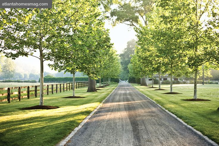 Along the compacted pea gravel drive, the original water oak allée has been replaced with one of Yarwood sycamore, a species better suited to the property's conditions.