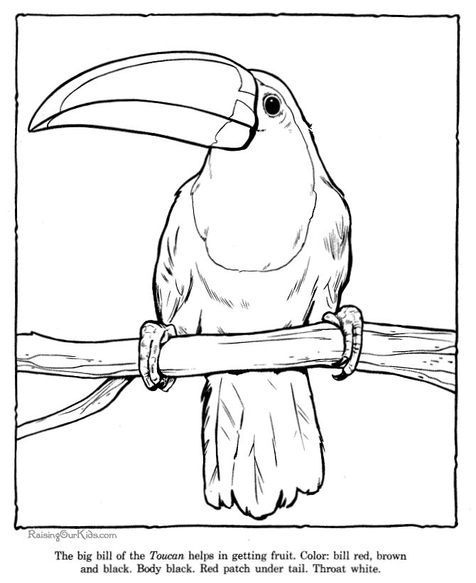 Free Rainforest Coloring Pages | Toucan coloring picture sheets - Zoo animals 032