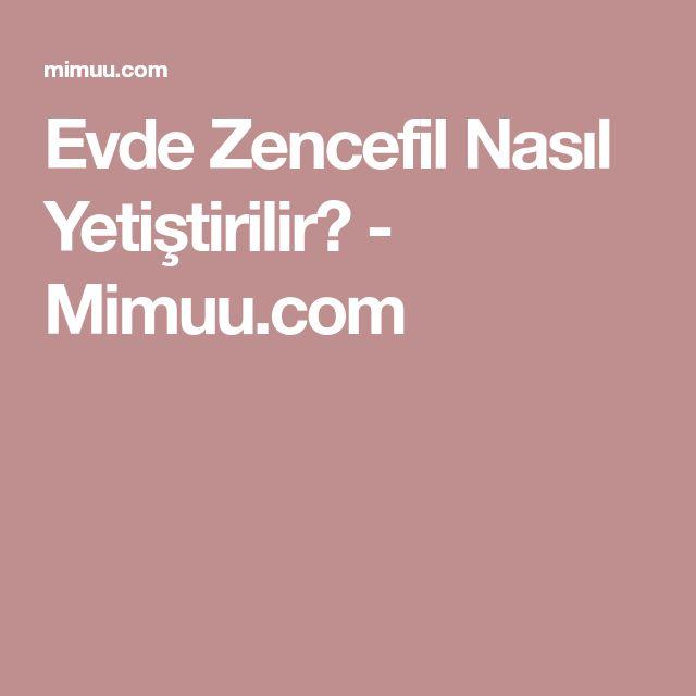 Evde Zencefil Nasıl Yetiştirilir? - Mimuu.com