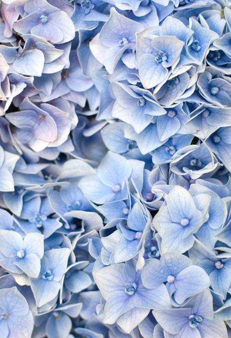 Die besten 25+ Hydrangea farben Ideen auf Pinterest Hortensien