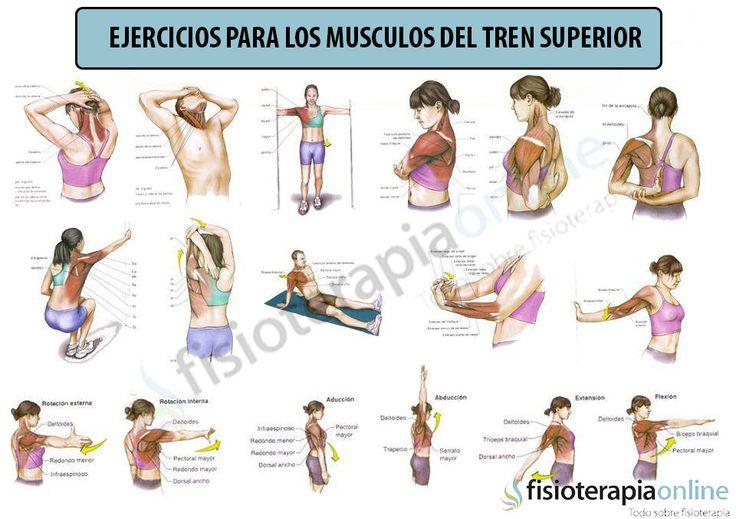 Ejercicios para estirar la musculatura del tren superior Además de esta infografía os compartimos unos enlaces con una serie de ejercicios que os ayudarán a estirar y flexibilizar los músculos del tronco y brazos: http://www.fisioterapia-online.com/videos/estiramiento-de-los-musculos-pectorales-biceps-y-antebrazo