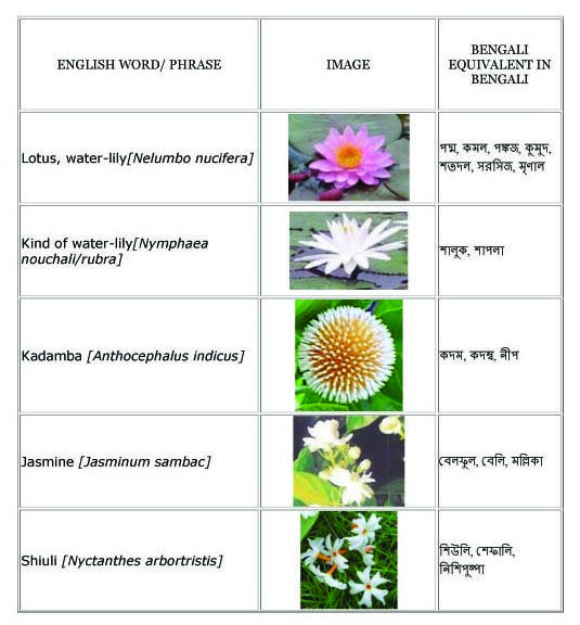 English Grammar with Bengali: Flowers English to Bangla Meaning