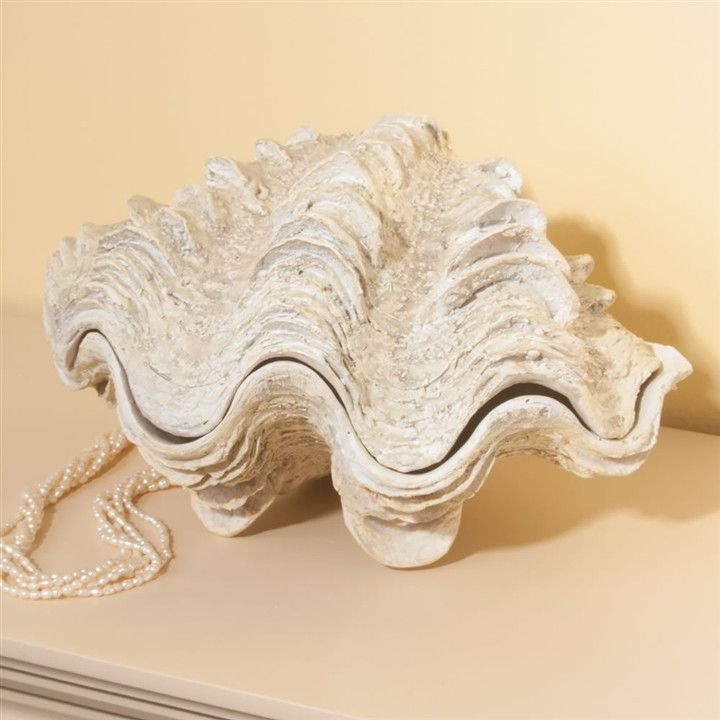 Giant Clam Shell Box (NB)