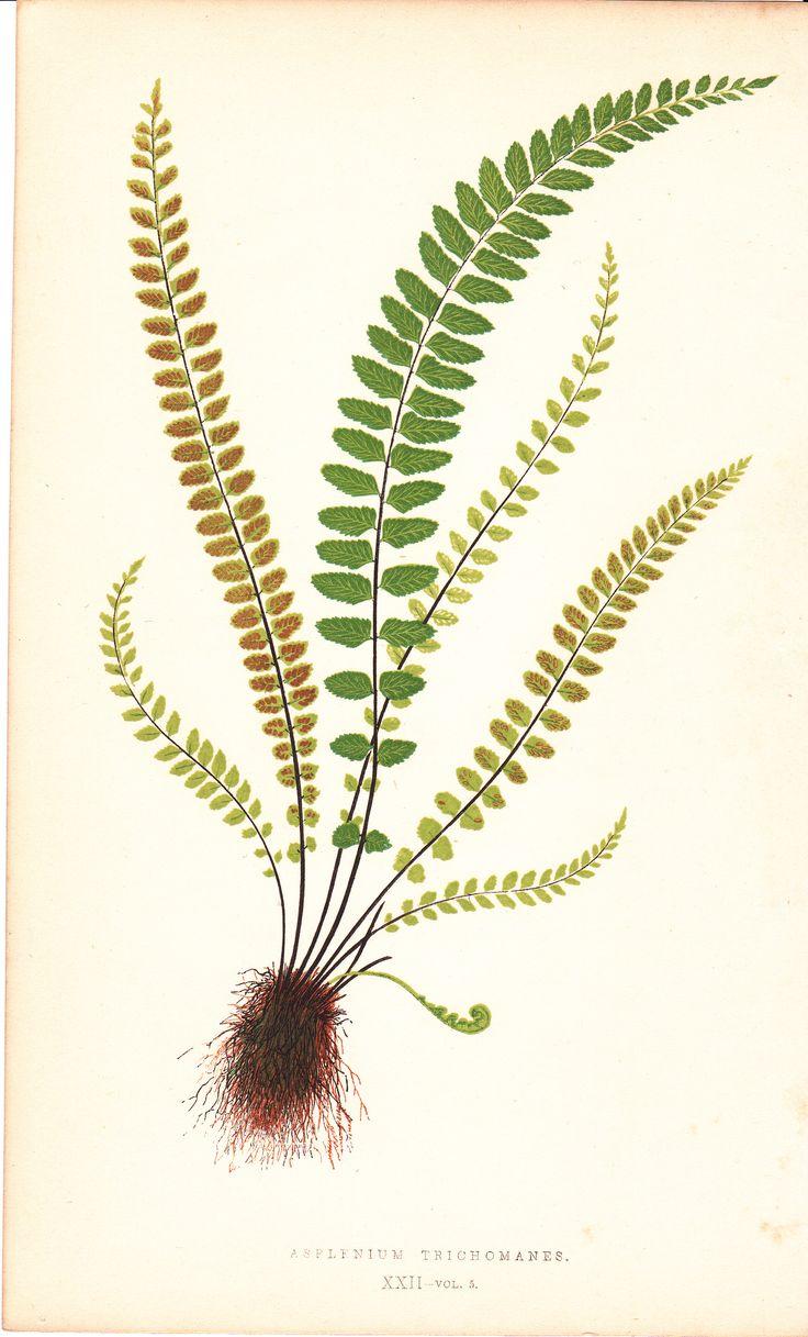 botanical1                                                                                                                                                      Más