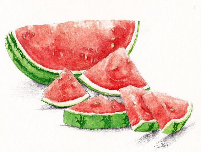 Watermelon Growing Drawing