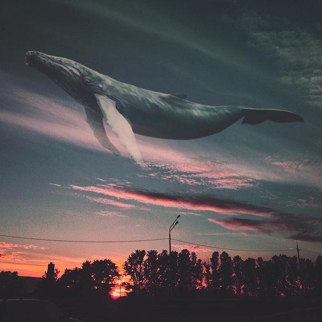 кит картинки на аву популярность