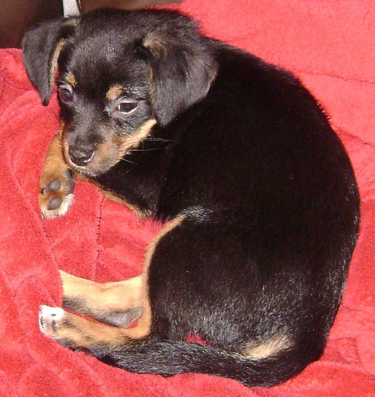 Beagle mix-looks like my doggie <3