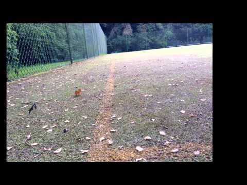▶ Alderley Edge Tennis Court Rejuvenation - YouTube