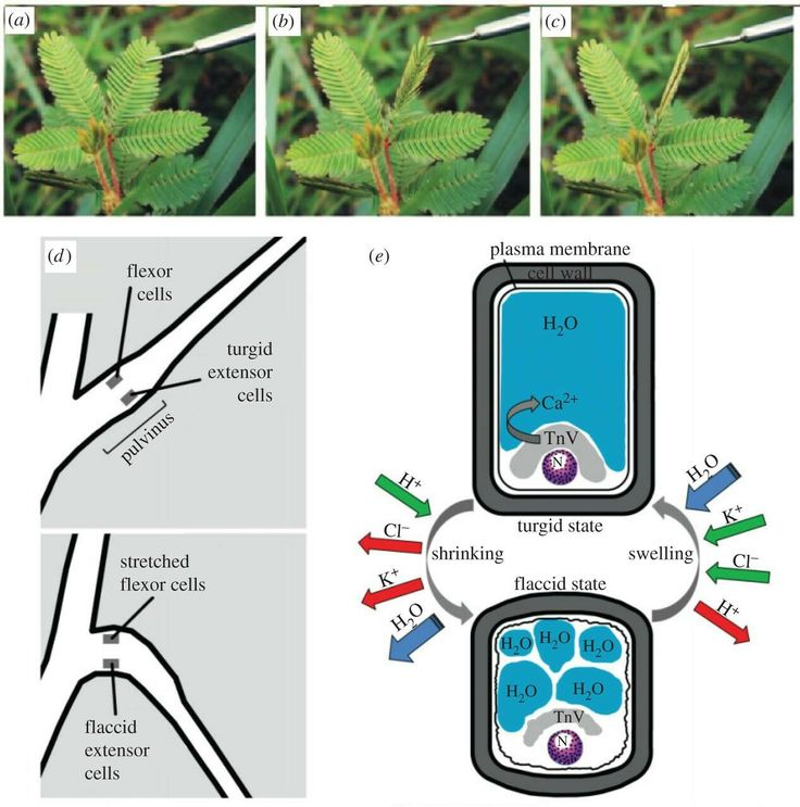 132 best EDU: PLANT ANATOMY images on Pinterest | Plant, Plants and ...